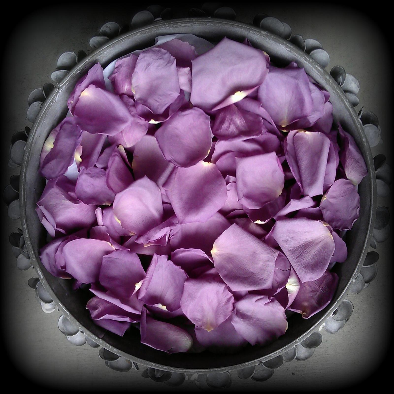 Classic lavender