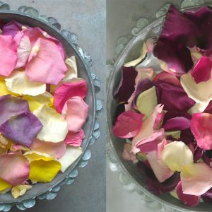 Aisle-Freeze-Dried-Rose-Petals