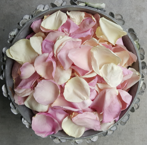 Mauve Ivory rose petals