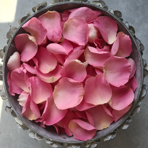 pink-rose-petal