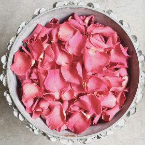 coral-rose-petal