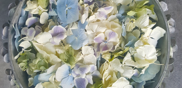 Our Hydrangea Petals in action!